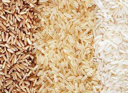 کاشت داشت و برداشت برنج