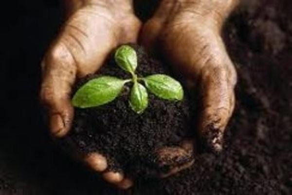 اصلاح خاک وکود دهی