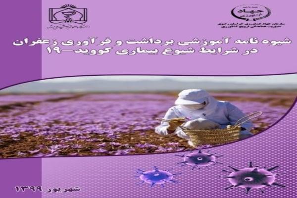 شیوه نامه آموزش برداشت و فراوری زعفران در شرایط شیوع بیماری کووید-19