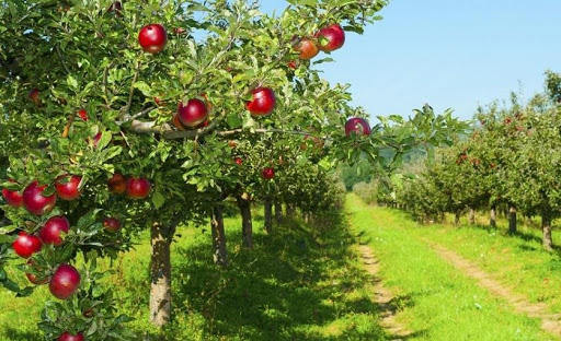 دستور العمل احداث باغ سیب